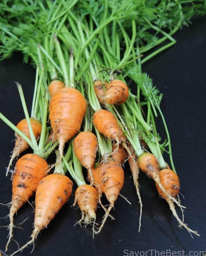 Carrots fresh from my garden