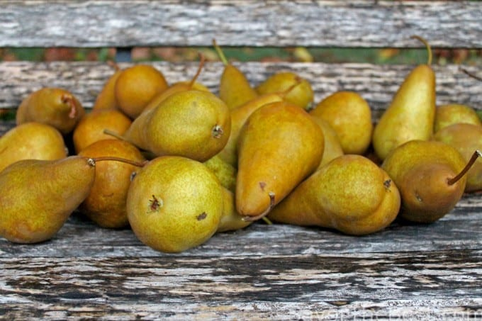 pears on a bench