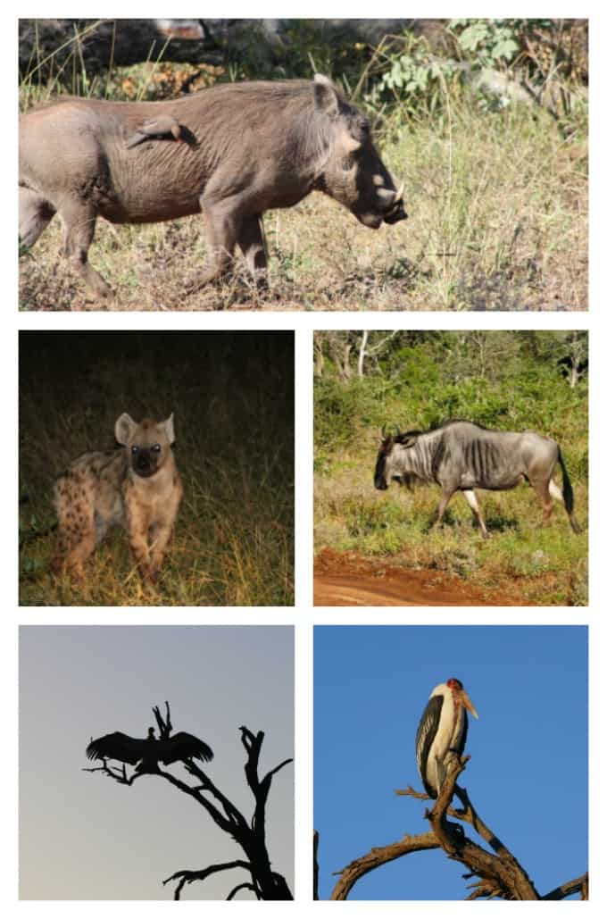 The ugly five South African Safari Animals