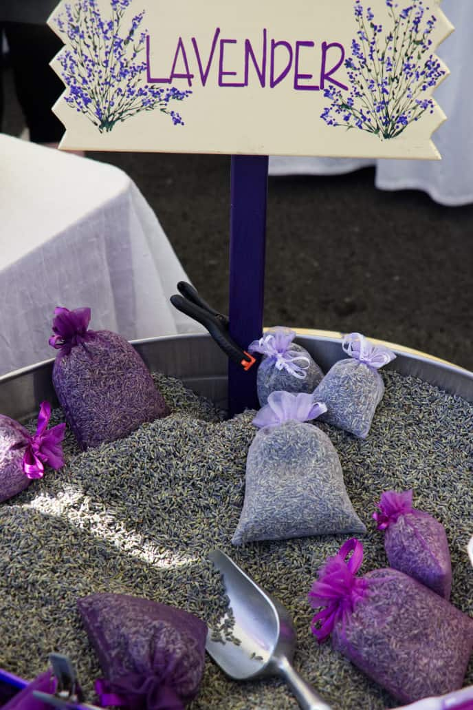 lavender buds at the Sequim lavender festival